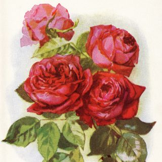 bouquet of red roses free clip art