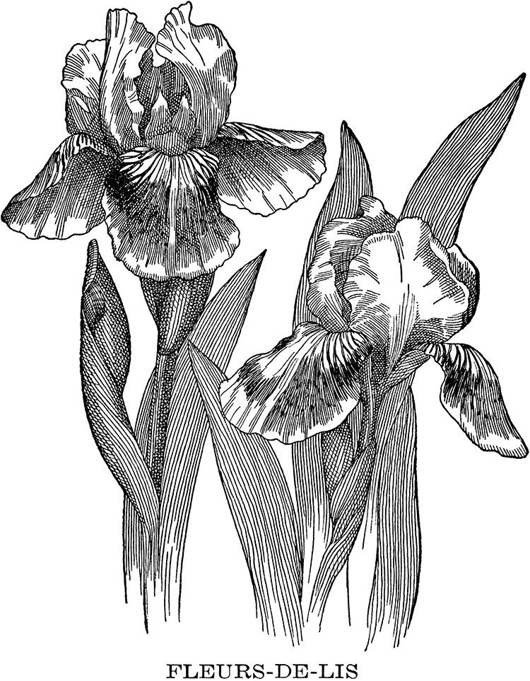 iris digital stamp transfer image fleur de lis
