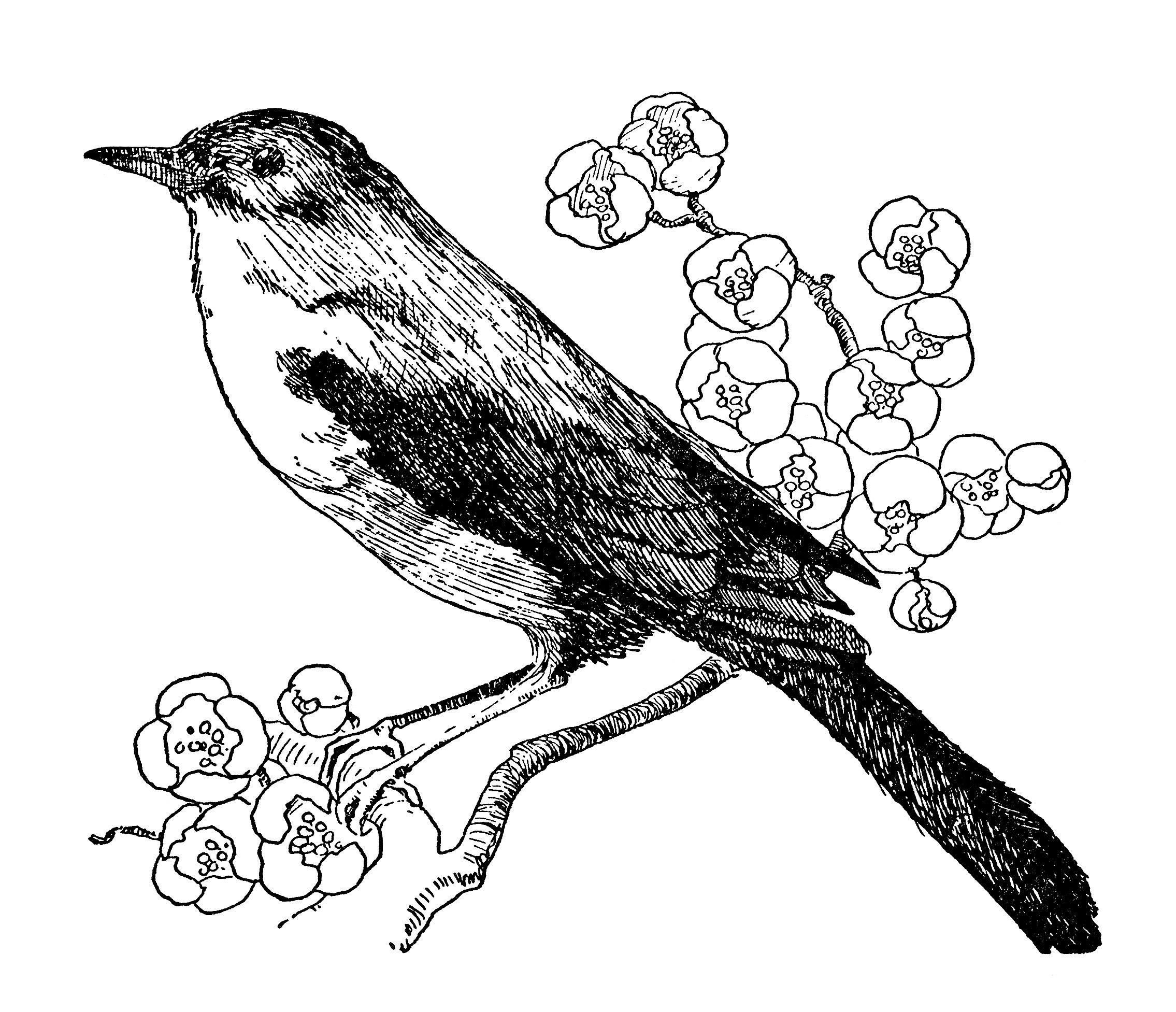 nightingale bird
