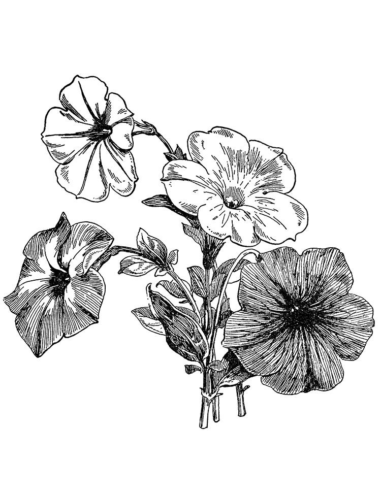 digital stamp transfer image petunias
