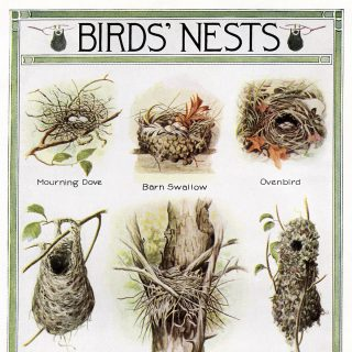 bird nests printable clip art