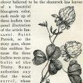 shamrock free printable clip art