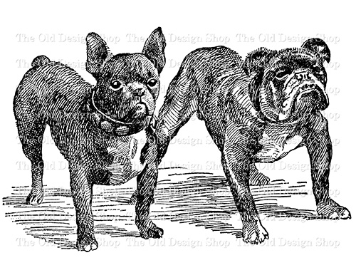 french and english bulldog clip art black and white