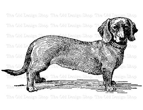 dachshund clip art black and white