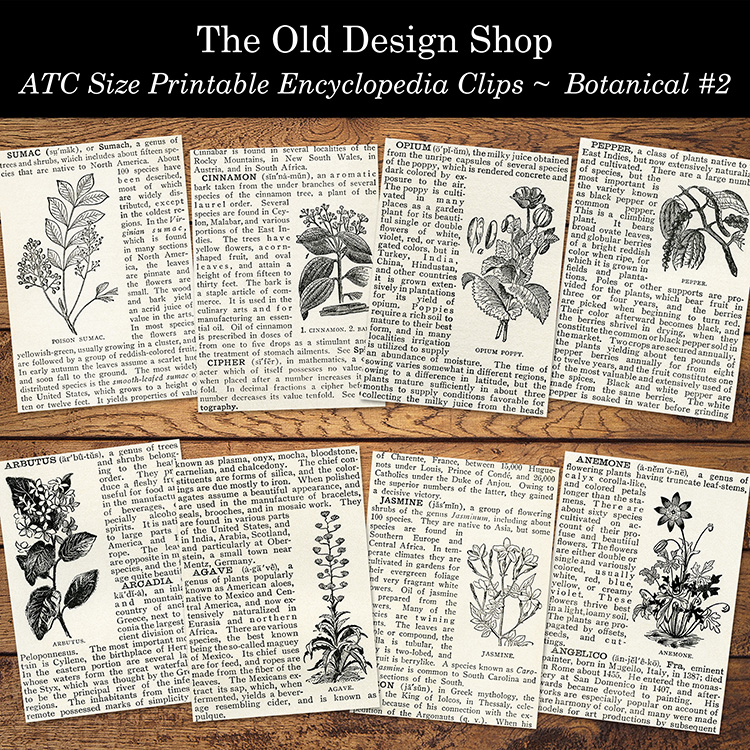 printable encyclopedia clips botanical