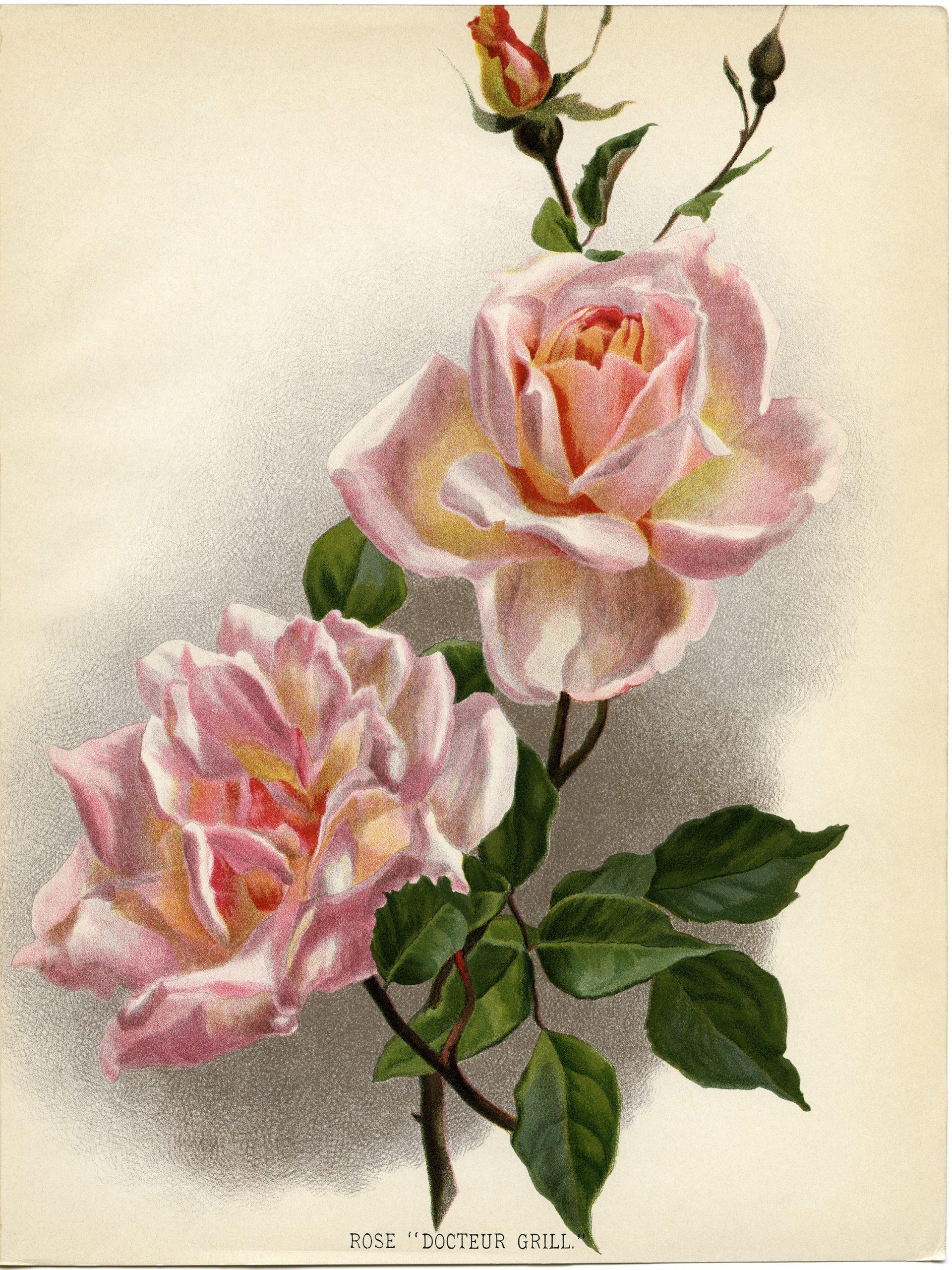 pretty pink roses free printable clip art