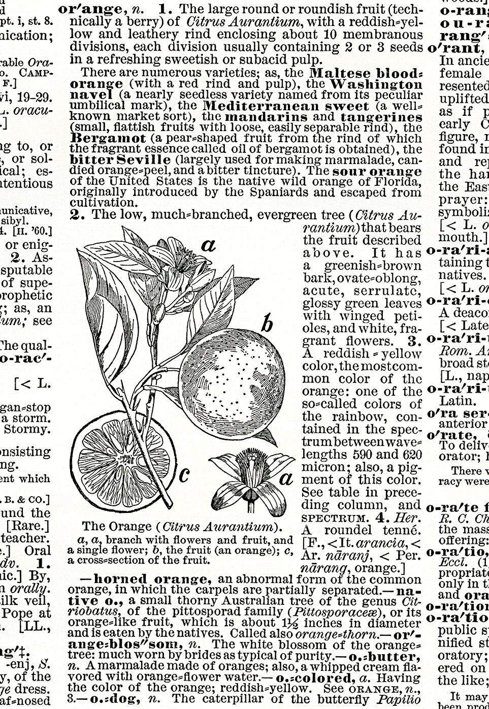 antique dictionary clipping orange
